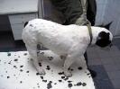 Аллергический дерматит у собаки